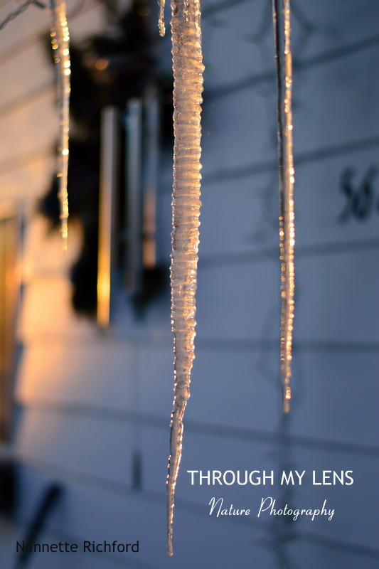 icicle at sunset