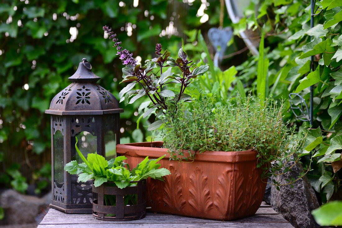 lantern with herbs