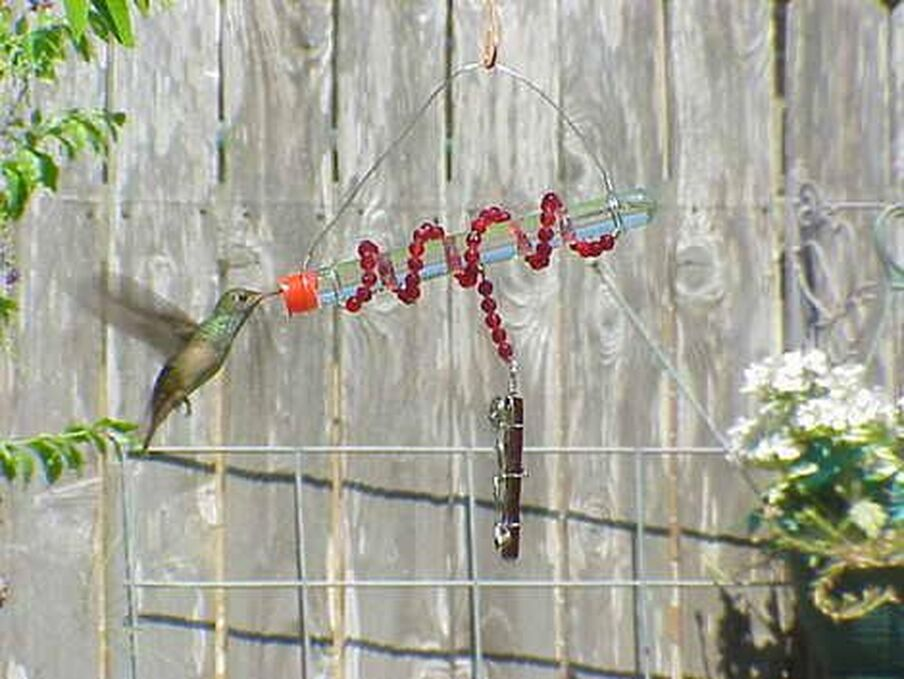 hummingbird feeder from test tubes Picture